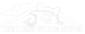 Wildlife Control of the Finger Lakes